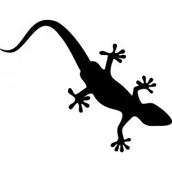 Salamandre Gecko